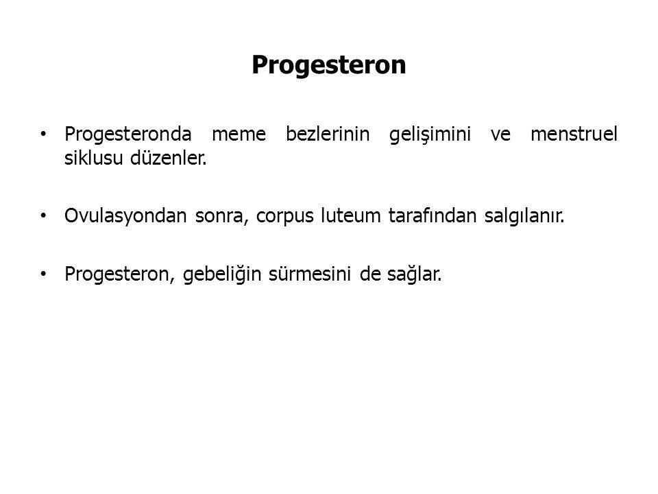 Progesteron Progesteronda meme bezlerinin gelişimini ve menstruel siklusu düzenler. Ovulasyondan sonra, corpus luteum tarafından salgılanır. Progester
