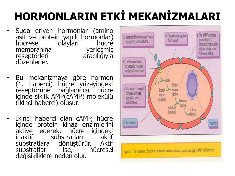 HORMONLARIN ETKİ MEKANİZMALARI Suda eriyen hormonlar (amino asit ve protein yapılı hormonlar) hücresel olayları hücre membranına yerleşmiş reseptörleri aracılığıyla düzenlerler.