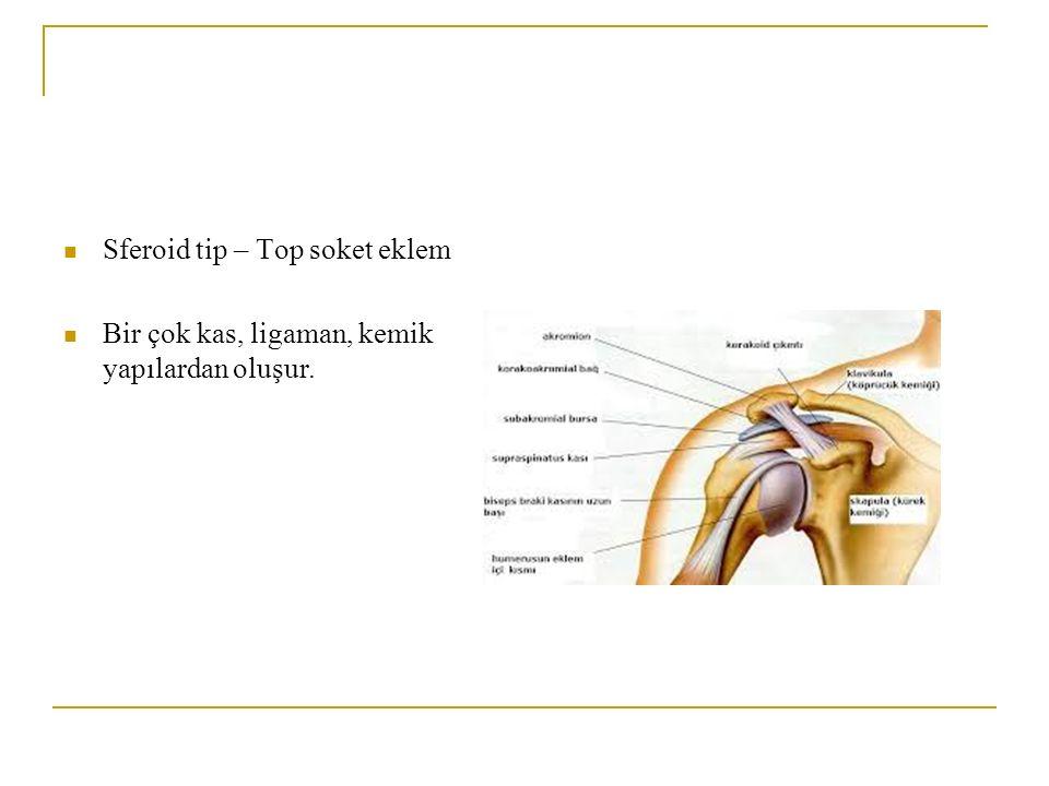 Sferoid tip – Top soket eklem Bir çok kas, ligaman, kemik yapılardan oluşur.