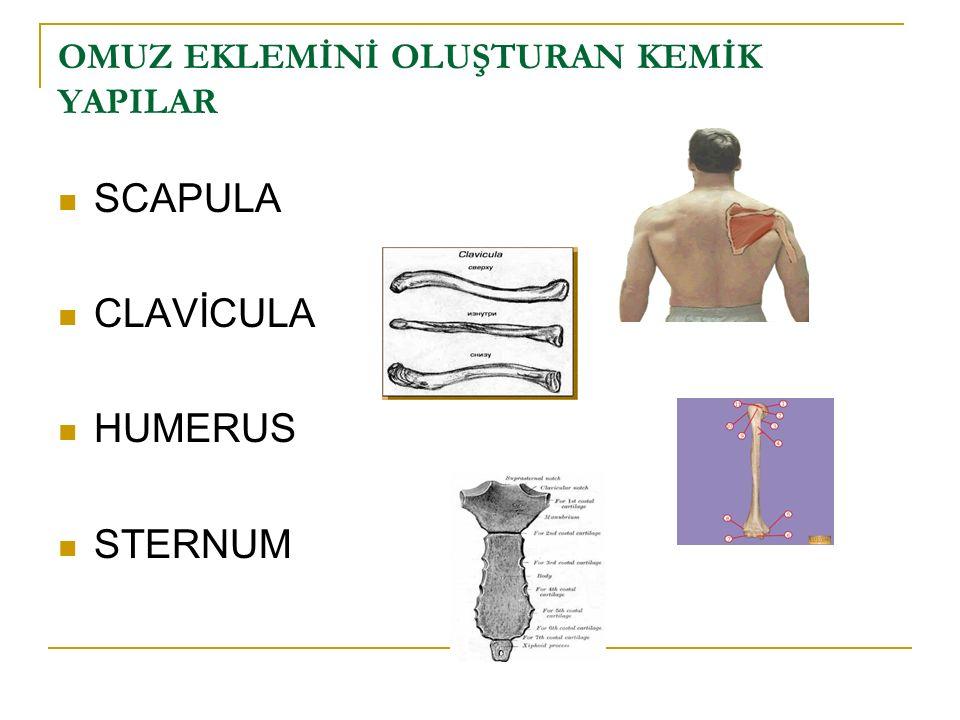 Makara egzersizleri (3. gün) İzometrik egzersizler Hareketler ağrı sınırında yaptırılır