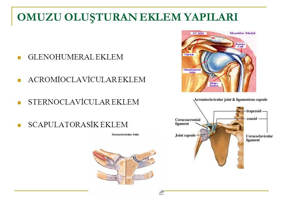 İLK 3 HAFTA Pendulum egzersizleri Pasif ER Aktif Omuz Fleksiyon veya abd verilmez!!!!!.