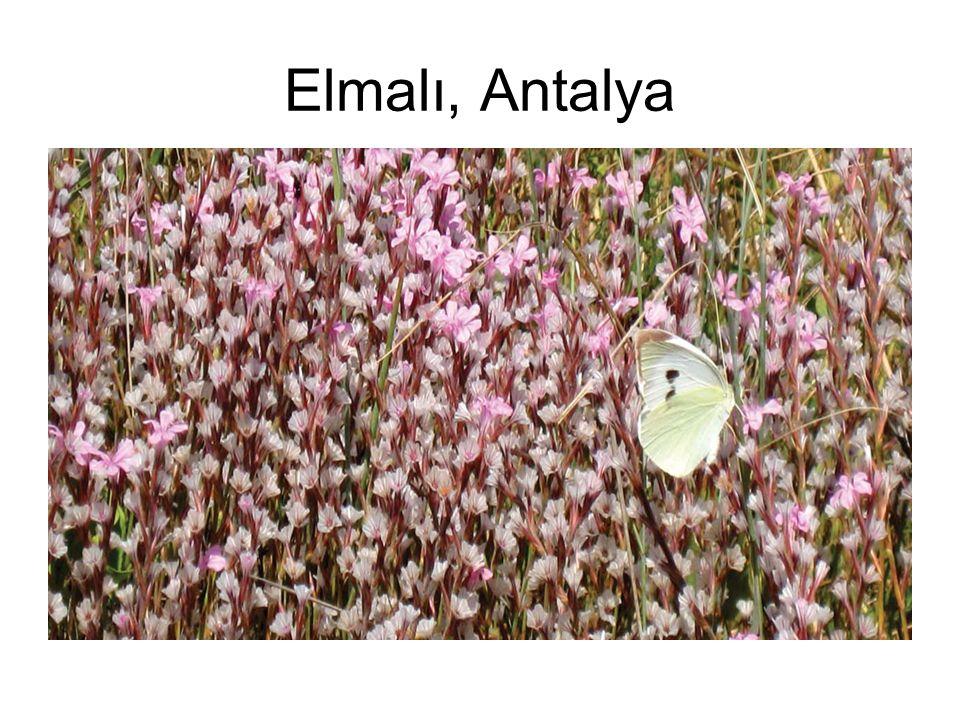 Elmalı, Antalya