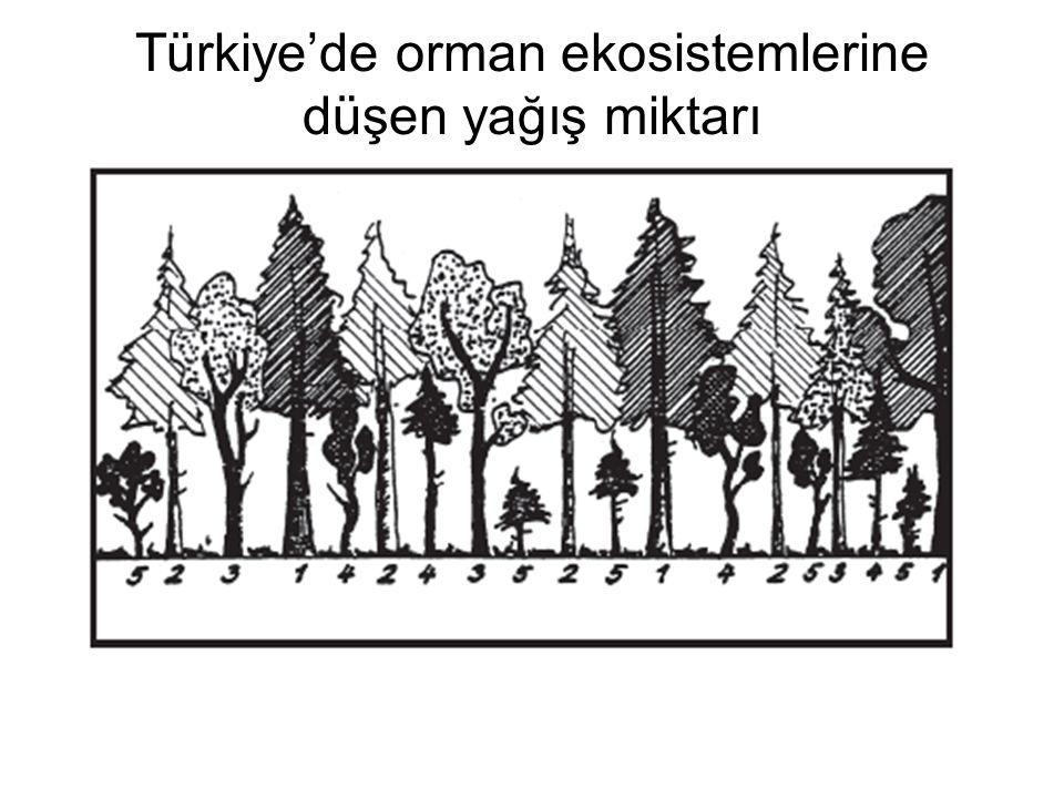 Türkiye'de orman ekosistemlerine düşen yağış miktarı