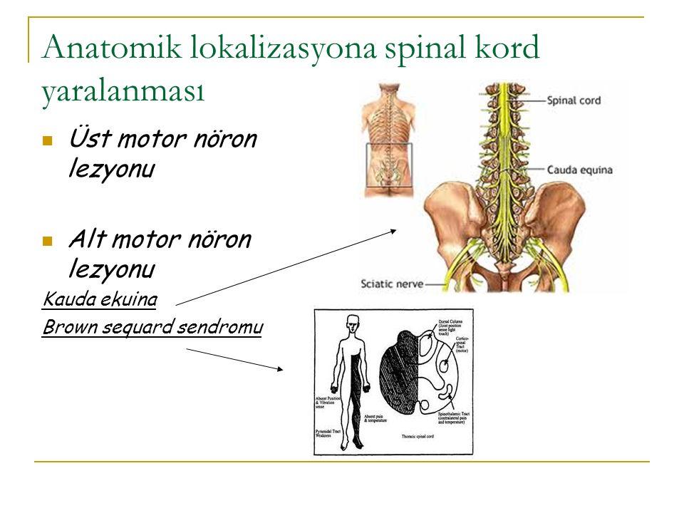 Anatomik lokalizasyona spinal kord yaralanması Üst motor nöron lezyonu Alt motor nöron lezyonu Kauda ekuina Brown sequard sendromu