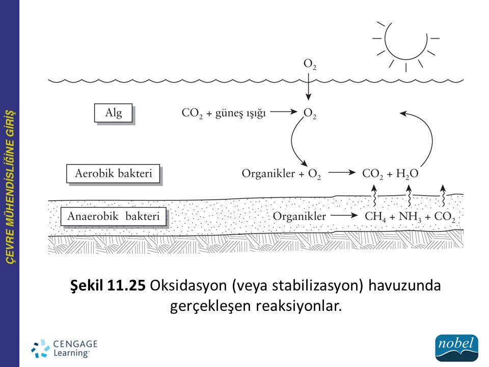 Şekil 11.25 Oksidasyon (veya stabilizasyon) havuzunda gerçekleşen reaksiyonlar.