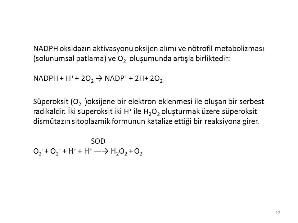 NADPH oksidazın aktivasyonu oksijen alımı ve nötrofil metabolizması (solunumsal patlama) ve O 2 - oluşumunda artışla birliktedir: NADPH + H + + 2O 2 → NADP + + 2H+ 2O 2 - Süperoksit (O 2 - )oksijene bir elektron eklenmesi ile oluşan bir serbest radikaldir.