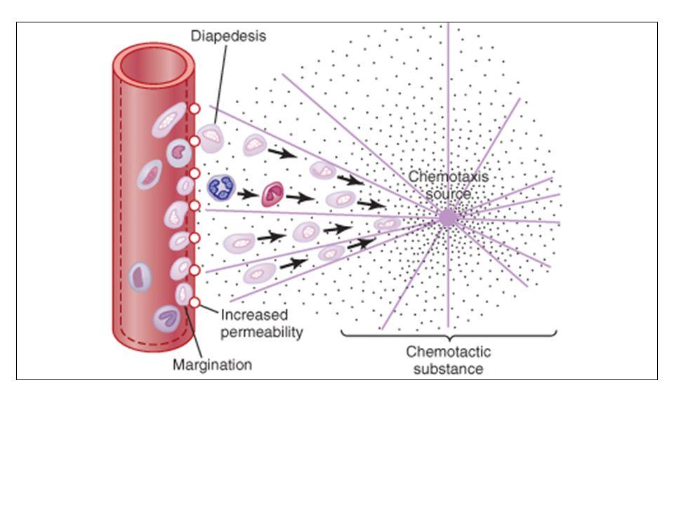 Miyeloperoksidaz ve defensinlere ek olarak, nötrofil granülleri kollagene saldıran iki metaloproteinaz ve elastaz, ve invazyon yapan organizmalara zarar veren diğer çeşitli proteazları da içerir.