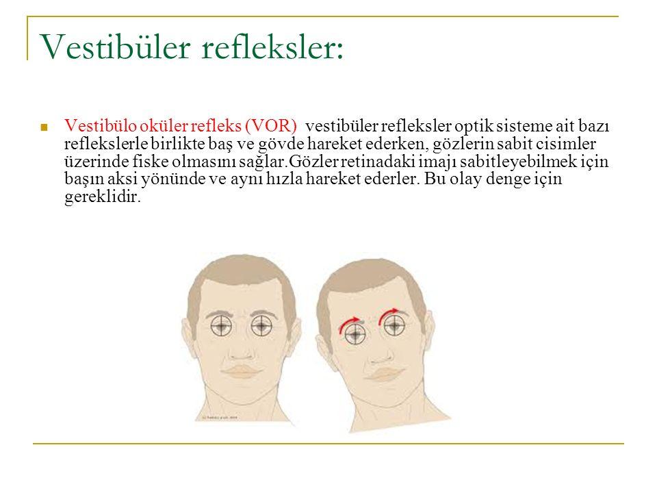 Vestibüler refleksler: Vestibülo oküler refleks (VOR) vestibüler refleksler optik sisteme ait bazı reflekslerle birlikte baş ve gövde hareket ederken, gözlerin sabit cisimler üzerinde fiske olmasını sağlar.Gözler retinadaki imajı sabitleyebilmek için başın aksi yönünde ve aynı hızla hareket ederler.