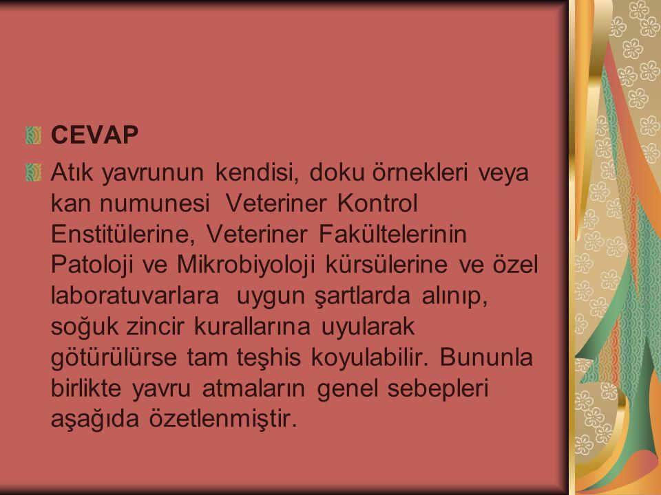 CEVAP Atık yavrunun kendisi, doku örnekleri veya kan numunesi Veteriner Kontrol Enstitülerine, Veteriner Fakültelerinin Patoloji ve Mikrobiyoloji kürs