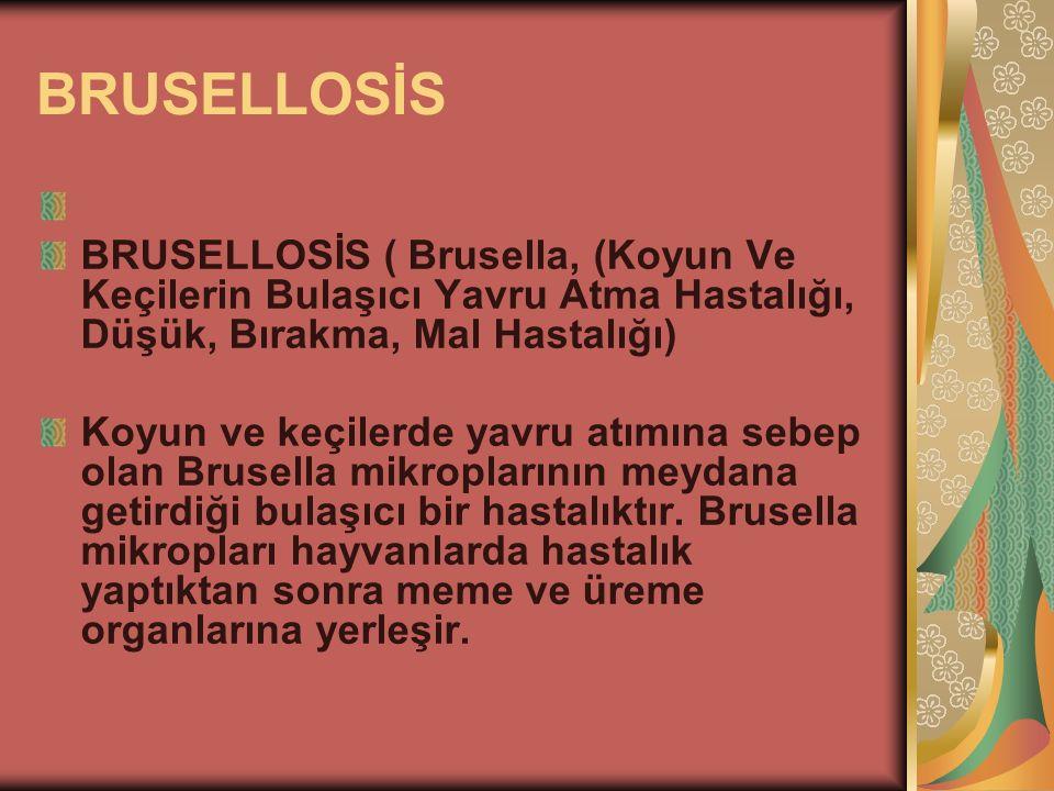 BRUSELLOSİS BRUSELLOSİS ( Brusella, (Koyun Ve Keçilerin Bulaşıcı Yavru Atma Hastalığı, Düşük, Bırakma, Mal Hastalığı) Koyun ve keçilerde yavru atımına