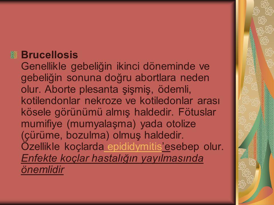Brucellosis Genellikle gebeliğin ikinci döneminde ve gebeliğin sonuna doğru abortlara neden olur. Aborte plesanta şişmiş, ödemli, kotilendonlar nekroz