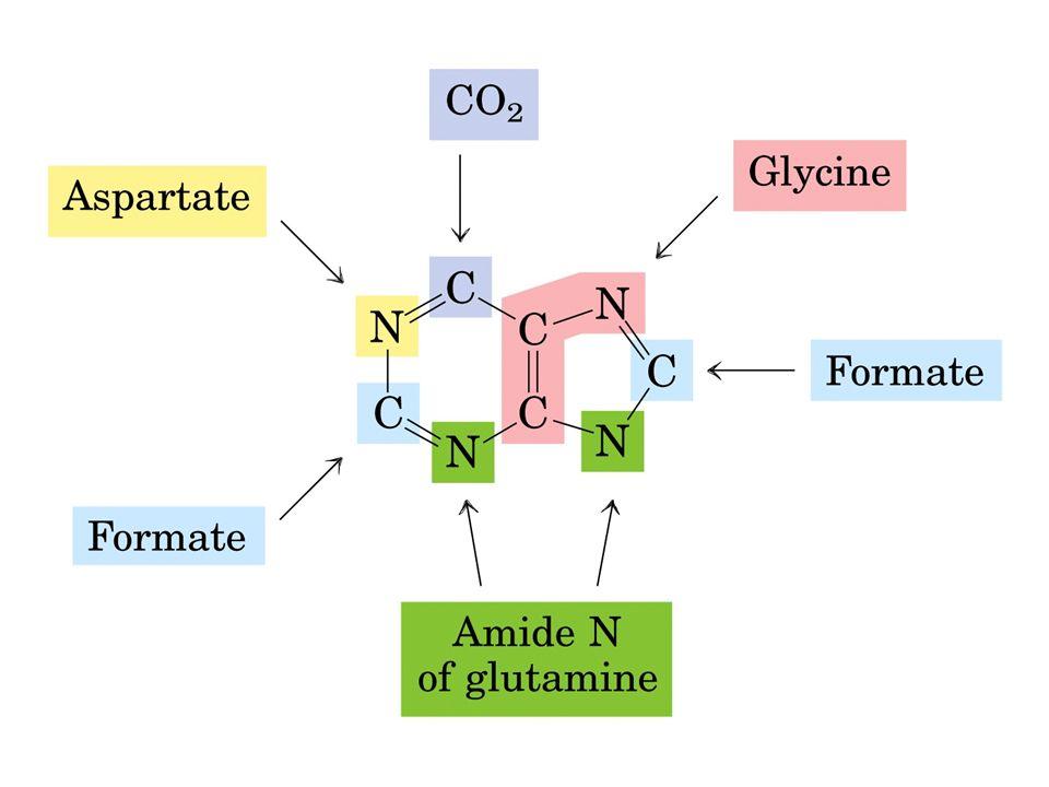 Histamin Histidinin dekarboksilasyonu ile oluşur.