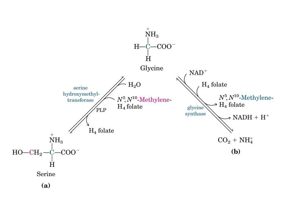 Glutatyon Gamma glutamil-sisteinil-glisin 2GSH + R-O-O-H GSSH + H 2 O + R-OH Glutatyon peroksidaz ile katalize olur.