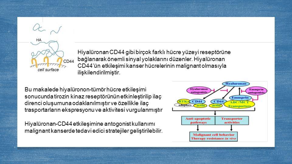Hiyalüronan CD44 gibi birçok farklı hücre yüzeyi reseptörüne bağlanarak önemli sinyal yolaklarını düzenler. Hiyalüronan CD44'ün etkileşimi kanser hücr