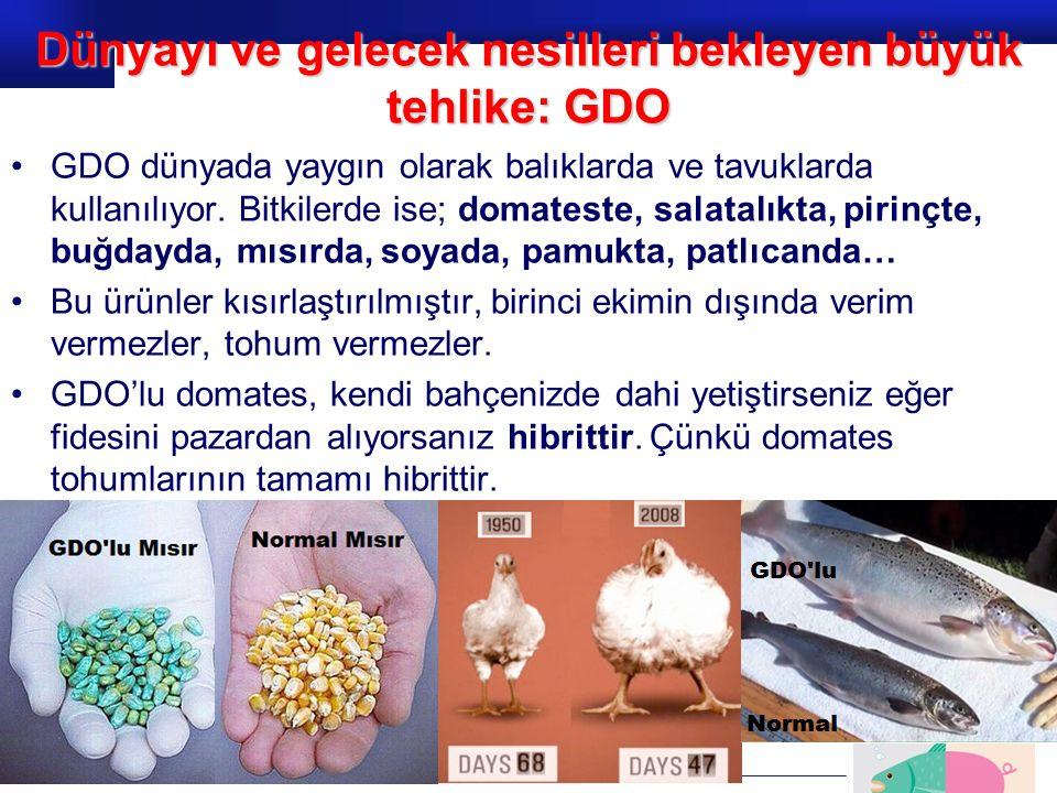Prof.Dr. İbrahim USLU GDO dünyada yaygın olarak balıklarda ve tavuklarda kullanılıyor. Bitkilerde ise; domateste, salatalıkta, pirinçte, buğdayda, mıs