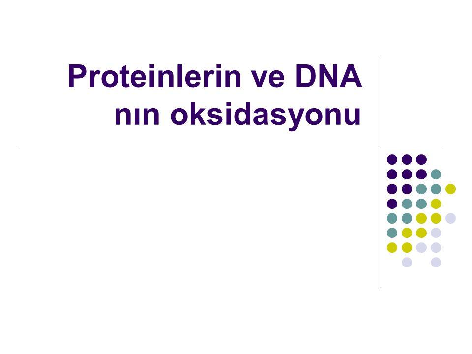 Amino asit yan zincirlerinin hidroksil veya karbonil derivelerine modifikasyonu, protein- protein çapraz bağlarının oluşumu ve polipeptid zincirlerinin parçalanması proteinlerin oksidatif reaksiyonlarının muhtemel sonuçlarıdır.