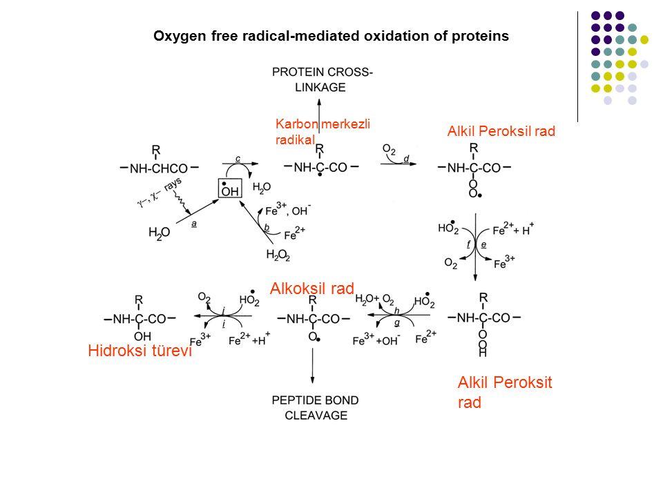 Oxygen free radical-mediated oxidation of proteins Karbon merkezli radikal Alkil Peroksil rad Alkil Peroksit rad Alkoksil rad Hidroksi türevi