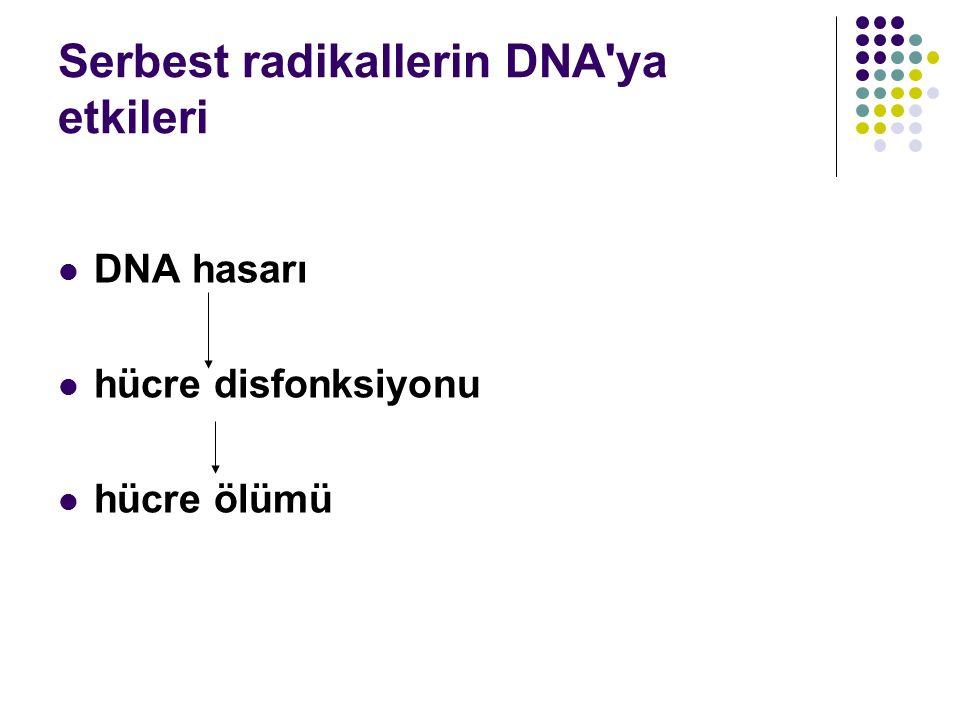 Serbest radikallerin DNA'ya etkileri DNA hasarı hücre disfonksiyonu hücre ölümü