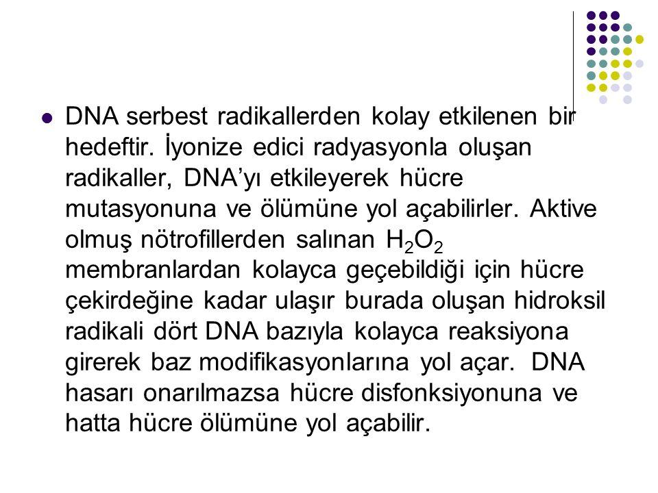 DNA serbest radikallerden kolay etkilenen bir hedeftir. İyonize edici radyasyonla oluşan radikaller, DNA'yı etkileyerek hücre mutasyonuna ve ölümüne y