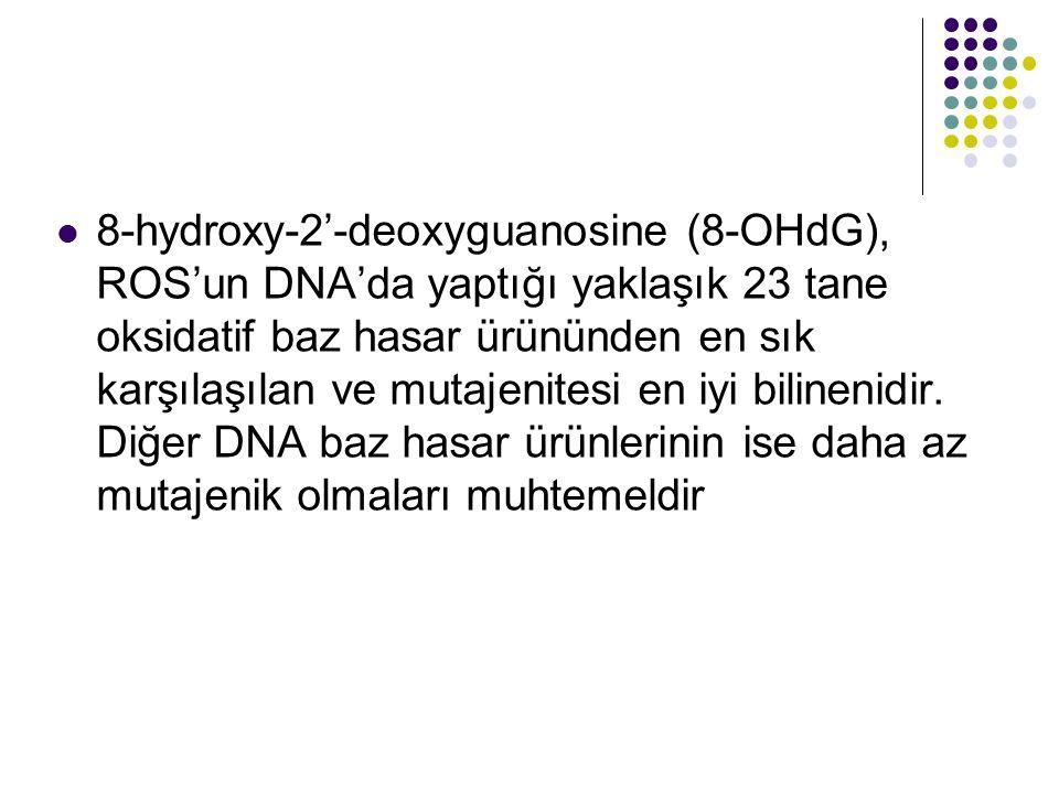 8-hydroxy-2'-deoxyguanosine (8-OHdG), ROS'un DNA'da yaptığı yaklaşık 23 tane oksidatif baz hasar ürününden en sık karşılaşılan ve mutajenitesi en iyi