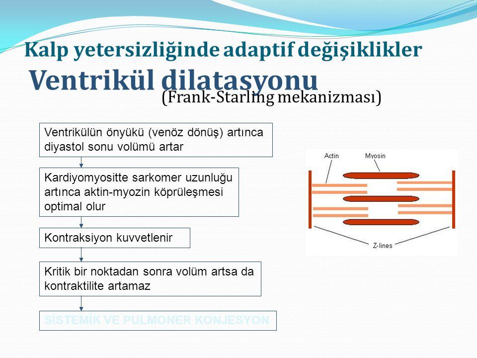Kalp yetersizliğinde adaptif değişiklikler Ventrikül dilatasyonu (Frank-Starling mekanizması) Ventrikülün önyükü (venöz dönüş) artınca diyastol sonu volümü artar Kardiyomyositte sarkomer uzunluğu artınca aktin-myozin köprüleşmesi optimal olur Kontraksiyon kuvvetlenir Kritik bir noktadan sonra volüm artsa da kontraktilite artamaz SİSTEMİK VE PULMONER KONJESYON