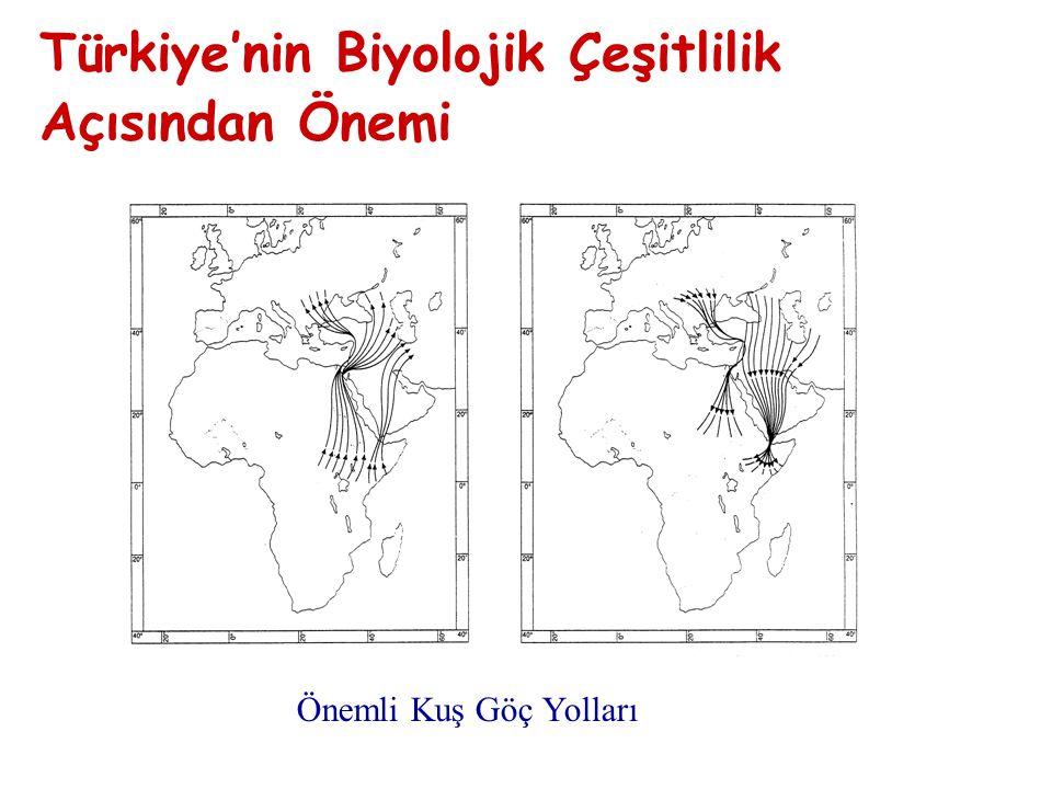 Önemli Kuş Göç Yolları Türkiye'nin Biyolojik Çeşitlilik Açısından Önemi