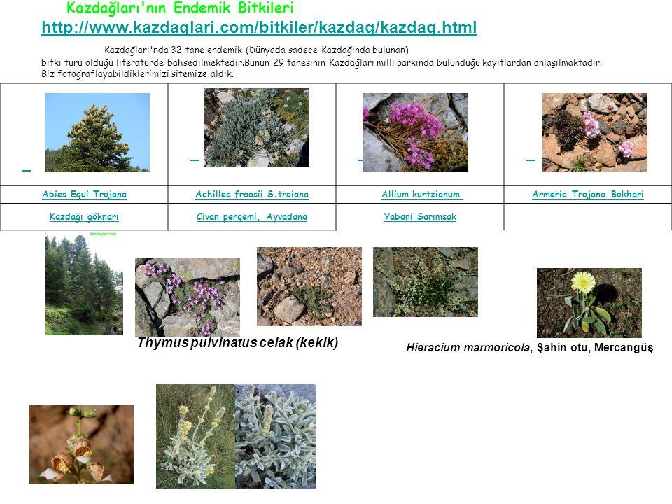 Kazdağları nın Endemik Bitkileri http://www.kazdaglari.com/bitkiler/kazdag/kazdag.html Kazdağları nda 32 tane endemik (Dünyada sadece Kazdağında bulunan) bitki türü olduğu literatürde bahsedilmektedir.Bunun 29 tanesinin Kazdağları milli parkında bulunduğu kayıtlardan anlaşılmaktadır.