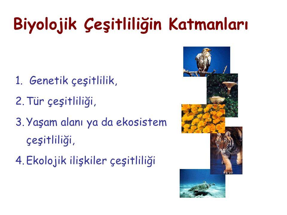 1. Genetik çeşitlilik, 2.Tür çeşitliliği, 3.Yaşam alanı ya da ekosistem çeşitliliği, 4.Ekolojik ilişkiler çeşitliliği Biyolojik Çeşitliliğin Katmanlar