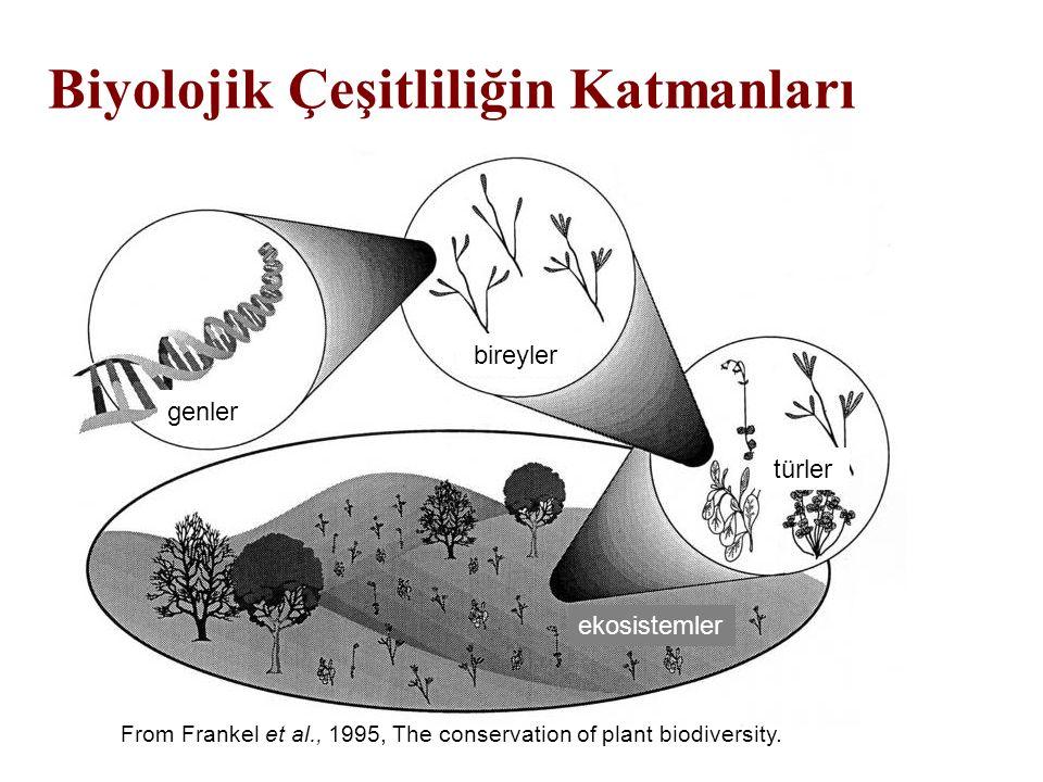 From Frankel et al., 1995, The conservation of plant biodiversity. Biyolojik Çeşitliliğin Katmanları genler bireyler türler ekosistemler