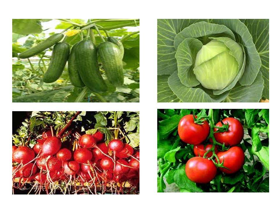 Elma, armut, incir, portakal, limon, şeftali, muz gibi bitkileri meyve olarak yeriz.