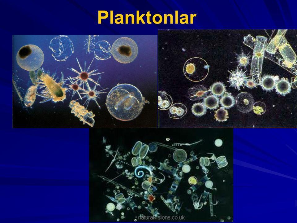 Planktonlar