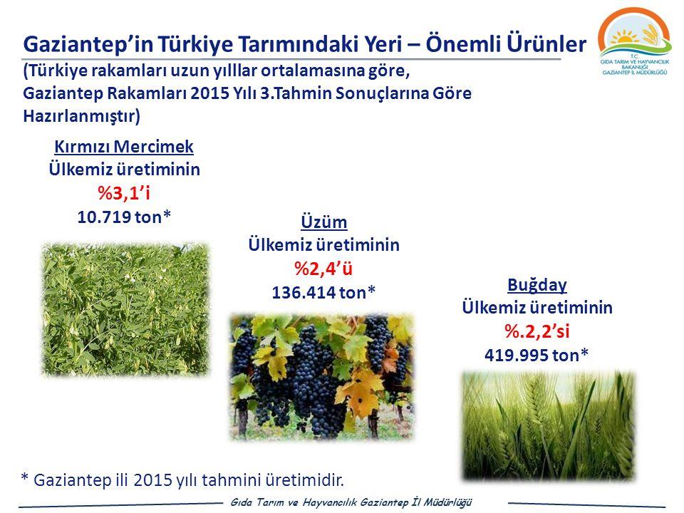 Kırmızı Mercimek Ülkemiz üretiminin %3,1'i 10.719 ton* Buğday Ülkemiz üretiminin %.2,2'si 419.995 ton* Üzüm Ülkemiz üretiminin %2,4'ü 136.414 ton* Gaziantep'in Türkiye Tarımındaki Yeri – Önemli Ü rünler (Türkiye rakamları uzun yılllar ortalamasına göre, Gaziantep Rakamları 2015 Yılı 3.Tahmin Sonuçlarına Göre Hazırlanmıştır) Gıda Tarım ve Hayvancılık Gaziantep İl Müdürlüğü * Gaziantep ili 2015 yılı tahmini üretimidir.