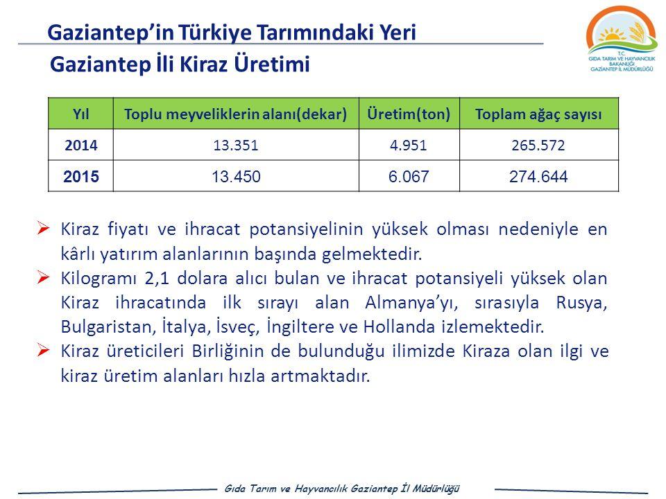 Gaziantep'in Türkiye Tarımındaki Yeri Gıda Tarım ve Hayvancılık Gaziantep İl Müdürlüğü Gaziantep İli Kiraz Üretimi  Kiraz fiyatı ve ihracat potansiyelinin yüksek olması nedeniyle en kârlı yatırım alanlarının başında gelmektedir.