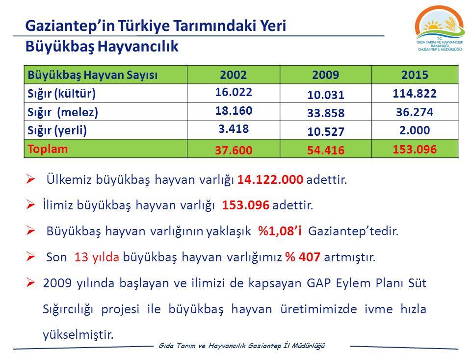 Gaziantep'in Türkiye Tarımındaki Yeri Büyükbaş Hayvancılık Büyükbaş Hayvan Sayısı200220092015 Sığır (kültür) 16.022 10.031 114.822 Sığır (melez) 18.160 33.858 36.274 Sığır (yerli) 3.418 10.527 2.000 Toplam 37.600 54.416 153.096  Ülkemiz büyükbaş hayvan varlığı 14.122.000 adettir.