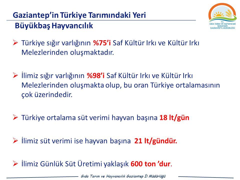  Türkiye sığır varlığının %75'i Saf Kültür Irkı ve Kültür Irkı Melezlerinden oluşmaktadır.