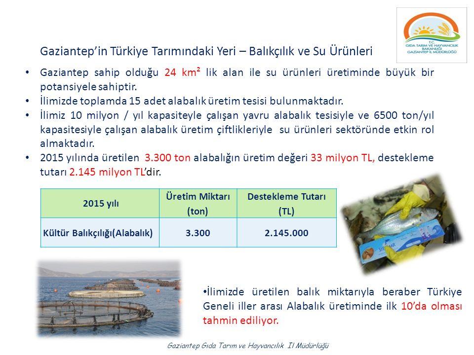 Gaziantep'in Türkiye Tarımındaki Yeri – Balıkçılık ve Su Ürünleri Gaziantep sahip olduğu 24 km² lik alan ile su ürünleri üretiminde büyük bir potansiyele sahiptir.