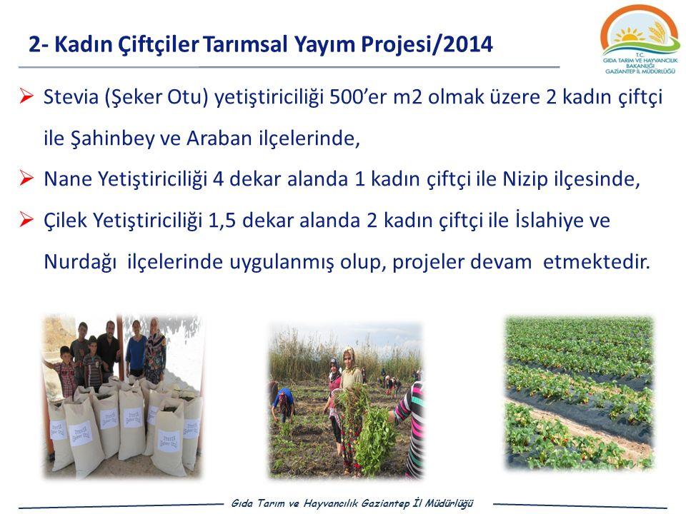 2- Kadın Çiftçiler Tarımsal Yayım Projesi/2014 Gıda Tarım ve Hayvancılık Gaziantep İl Müdürlüğü  Stevia (Şeker Otu) yetiştiriciliği 500'er m2 olmak üzere 2 kadın çiftçi ile Şahinbey ve Araban ilçelerinde,  Nane Yetiştiriciliği 4 dekar alanda 1 kadın çiftçi ile Nizip ilçesinde,  Çilek Yetiştiriciliği 1,5 dekar alanda 2 kadın çiftçi ile İslahiye ve Nurdağı ilçelerinde uygulanmış olup, projeler devam etmektedir.