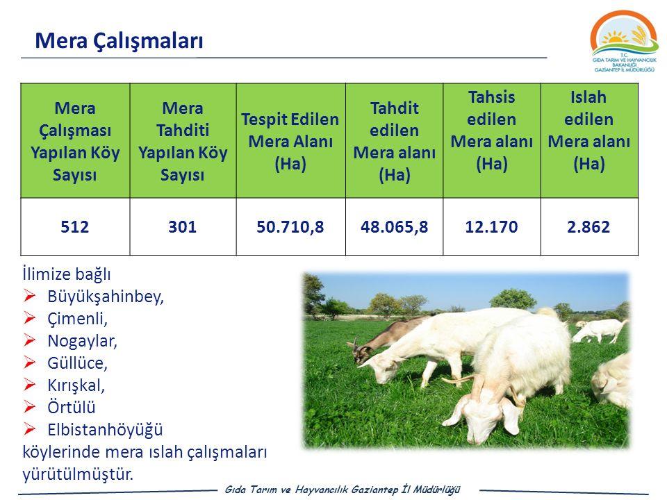 Mera Çalışmaları Gıda Tarım ve Hayvancılık Gaziantep İl Müdürlüğü Mera Çalışması Yapılan Köy Sayısı Mera Tahditi Yapılan Köy Sayısı Tespit Edilen Mera Alanı (Ha) Tahdit edilen Mera alanı (Ha) Tahsis edilen Mera alanı (Ha) Islah edilen Mera alanı (Ha) 51230150.710,848.065,812.1702.862 İlimize bağlı  Büyükşahinbey,  Çimenli,  Nogaylar,  Güllüce,  Kırışkal,  Örtülü  Elbistanhöyüğü köylerinde mera ıslah çalışmaları yürütülmüştür.