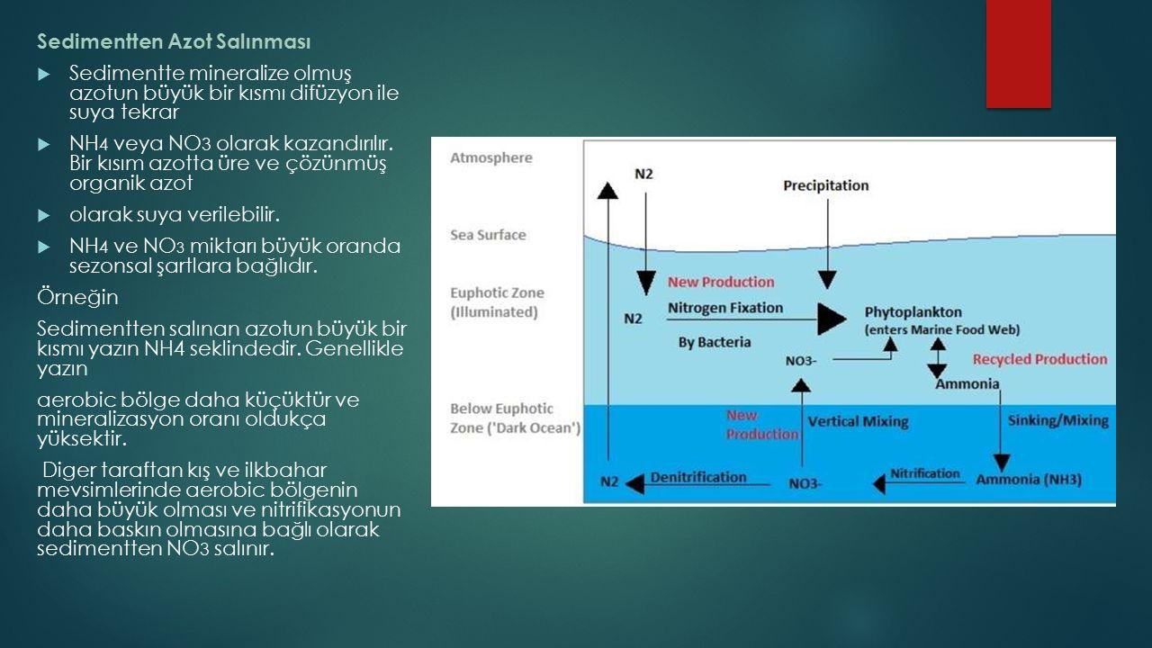 Sedimentten Azot Salınması  Sedimentte mineralize olmuş azotun büyük bir kısmı difüzyon ile suya tekrar  NH 4 veya NO 3 olarak kazandırılır. Bir kıs