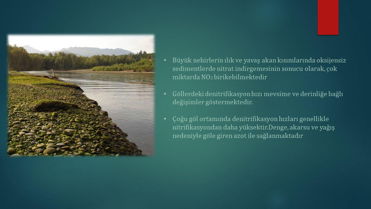 Büyük nehirlerin ılık ve yavaş akan kısımlarında oksijensiz sedimentlerde nitrat indirgemesinin sonucu olarak, çok miktarda NO 2 birikebilmektedir Göl
