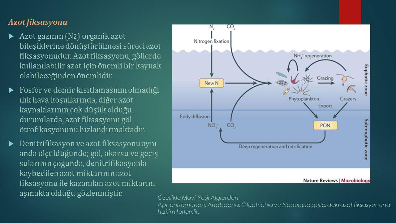 Azot fiksasyonu  Azot gazının (N 2 ) organik azot bileşiklerine dönüştürülmesi süreci azot fiksasyonudur. Azot fiksasyonu, göllerde kullanılabilir az