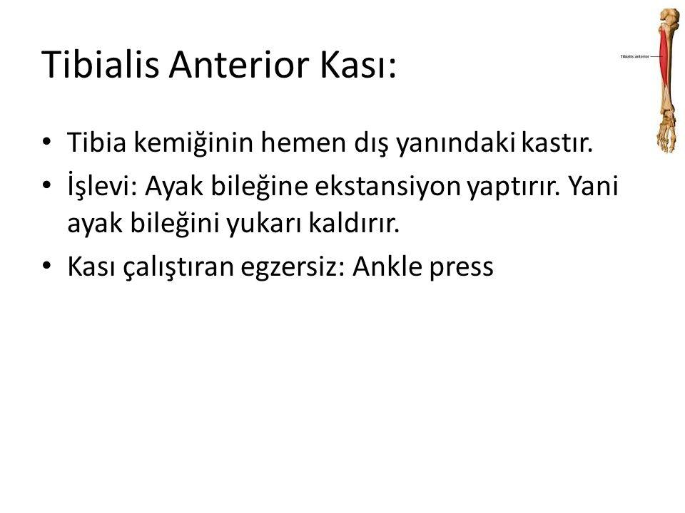 Tibialis Anterior Kası: Tibia kemiğinin hemen dış yanındaki kastır. İşlevi: Ayak bileğine ekstansiyon yaptırır. Yani ayak bileğini yukarı kaldırır. Ka