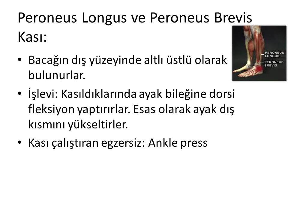 Peroneus Longus ve Peroneus Brevis Kası: Bacağın dış yüzeyinde altlı üstlü olarak bulunurlar. İşlevi: Kasıldıklarında ayak bileğine dorsi fleksiyon ya