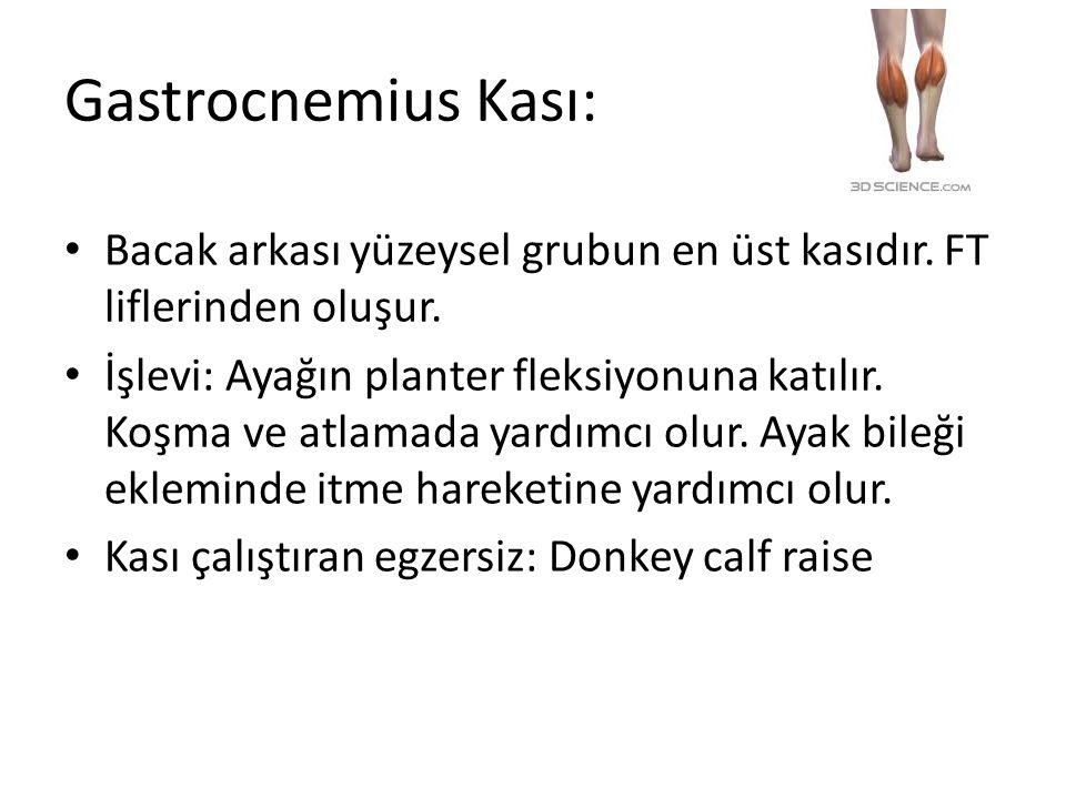 Gastrocnemius Kası: Bacak arkası yüzeysel grubun en üst kasıdır. FT liflerinden oluşur. İşlevi: Ayağın planter fleksiyonuna katılır. Koşma ve atlamada