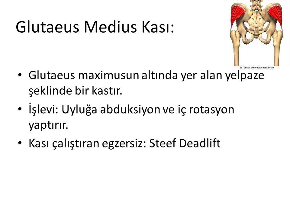 Glutaeus Medius Kası: Glutaeus maximusun altında yer alan yelpaze şeklinde bir kastır. İşlevi: Uyluğa abduksiyon ve iç rotasyon yaptırır. Kası çalıştı