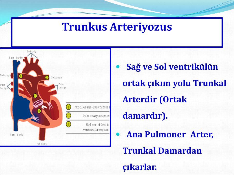 Trunkus Arteriyozus Sağ ve Sol ventrikülün ortak çıkım yolu Trunkal Arterdir (Ortak damardır). Ana Pulmoner Arter, Trunkal Damardan çıkarlar.