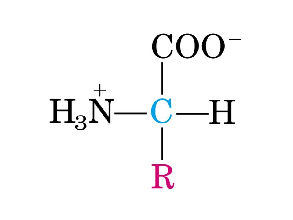 C ve H atomları son ürün olarak CO 2 ve H 2 O ya yıkılır.