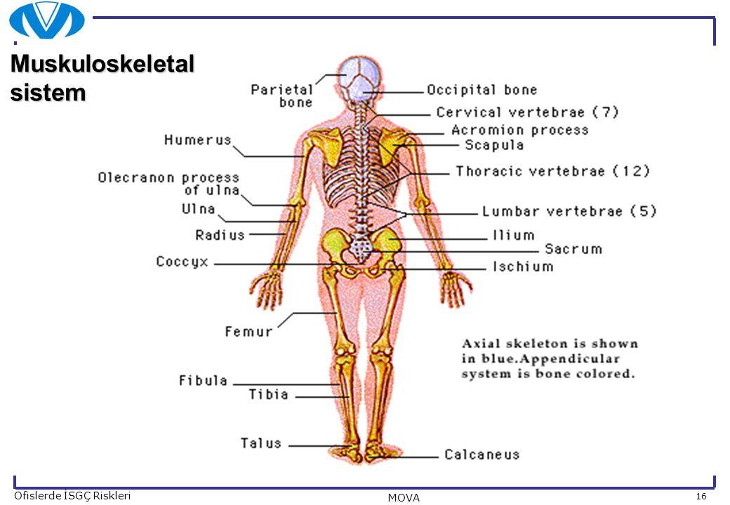 16 Ofislerde İSGÇ Riskleri MOVA MOVAMOVAMOVAMOVA Muskuloskeletal sistem