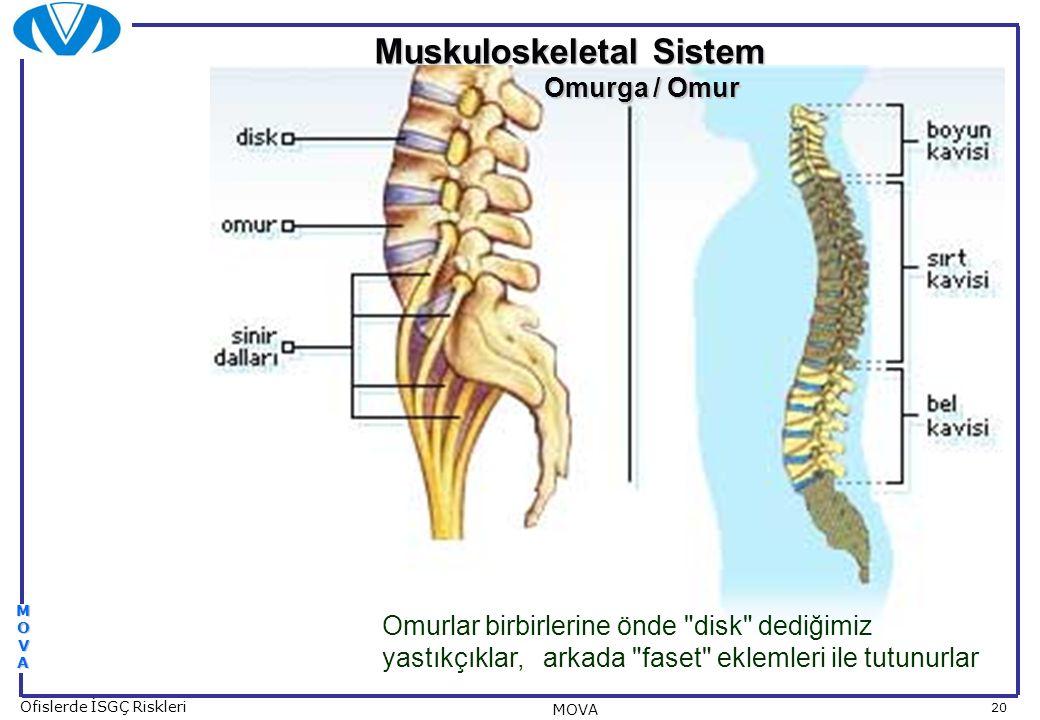 20 Ofislerde İSGÇ Riskleri MOVA MOVAMOVAMOVAMOVA Muskuloskeletal Sistem Omurga / Omur Omurga / Omur Omurlar birbirlerine önde