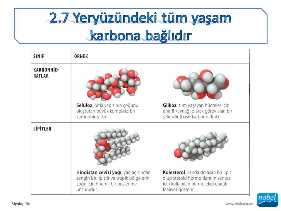 ANA SORU: Karbonun hangi özelliği yaşam moleküllerinin temelini oluşturmak için uygun olmasını sağlar?